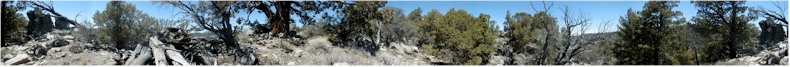 Panoramic View in the San Bernardino National Forest near to Onyx Point - 8,500 feet - with native cactus! - 1st June 2002