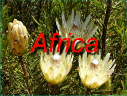 Come and Visit our Photo Galleries and magnificant Panoramas from trips to South Africa during both Springtime and Summertime during 2003 and 2005!