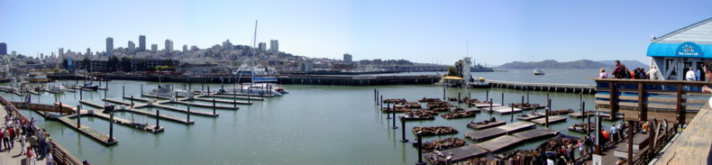 View from Pier 30 across the San Francisco City and the Seals basking in the sunshine.
