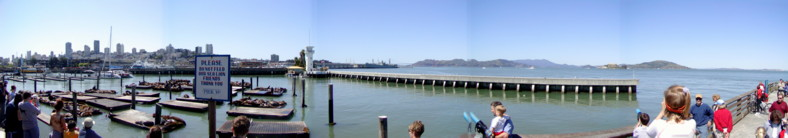 San Francisco Bay - Pier 39 with the Sea Lions basking in the sun!